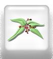 Wikilogo-Logo-DVNC